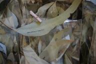 pieces of leaving packet indigo eli