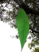 poet-tree-in-progress-indigo-eli