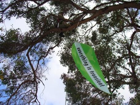 Poet Tree, Kings Park Botanic Garden WA