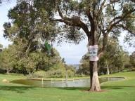Poet Tree, Kings Park Spring Festival