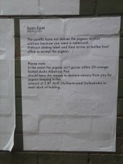 Spam Egret, Noted Festival Bill Poetries project